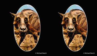 How to Parallel View 3D Stereos